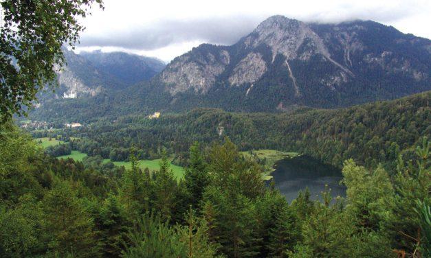 Der Alpenrosenweg
